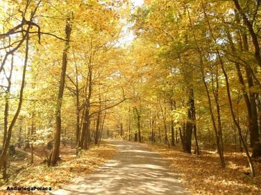 El bosque en otoño/Polonia