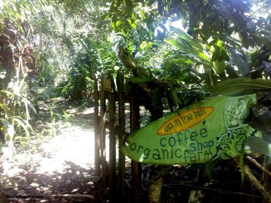 Gospodarstwo w Panamie, na wyspie Bastimento, Bocas del Toro/Una finca en Panama,isla Bastimento