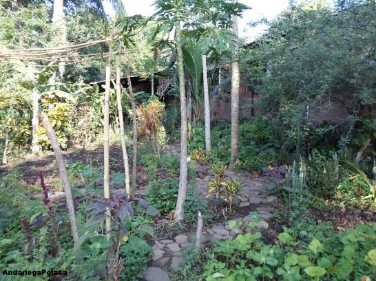 Gospodarstwo permakulturowe w Salwadorze, nieopodal Santa Ana/una finca organica cerca de Santa Ana en Salvador
