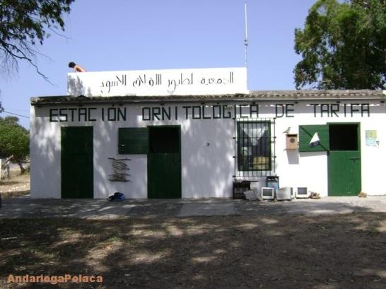Renowacja stacji ornitologicznej w Tarifie, Hiszpania