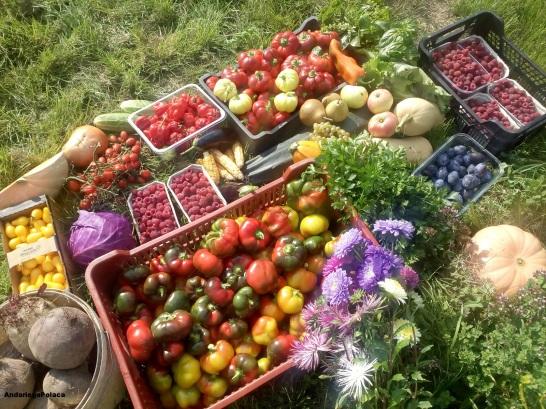 Las frutas y verduras de mi huerta